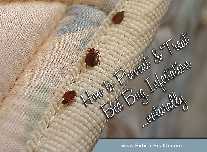 Best In Store Bed Bug Treatment