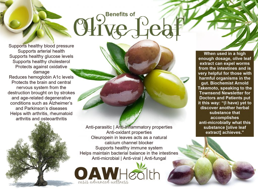 olive leaf health benefits