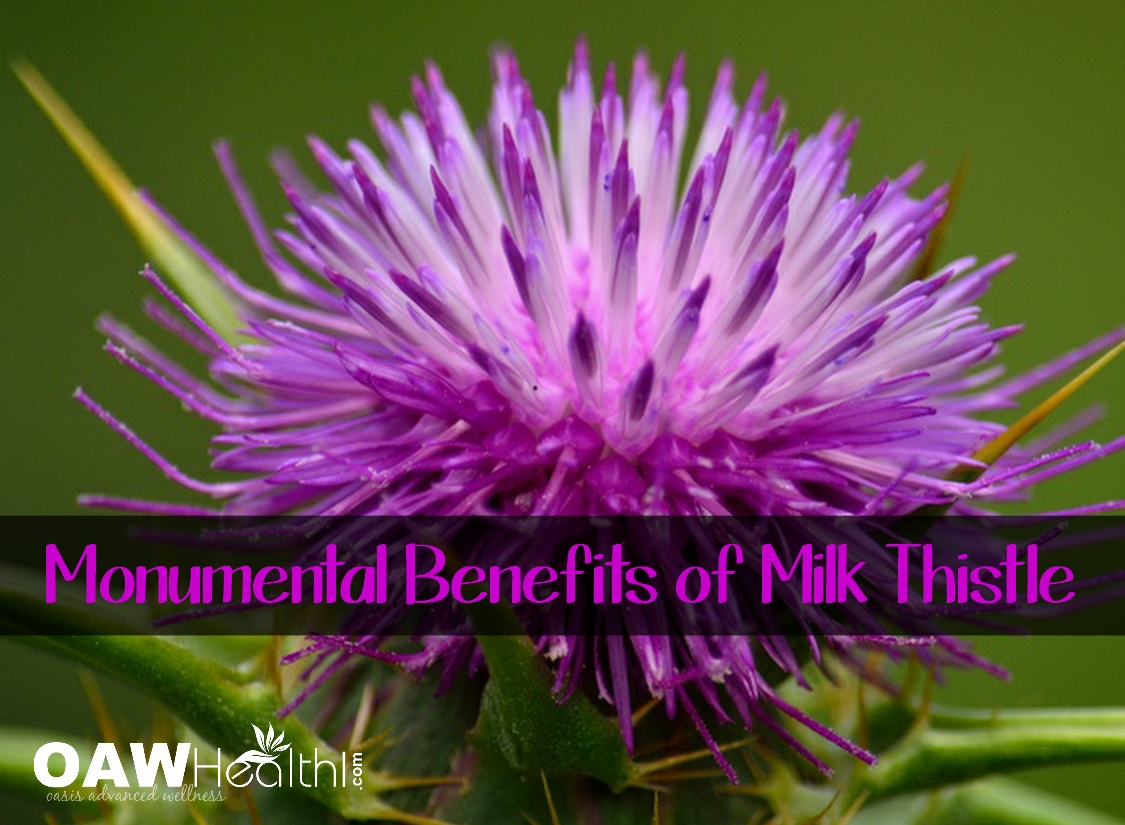 Monumental Benefits of Milk Thistle Seed
