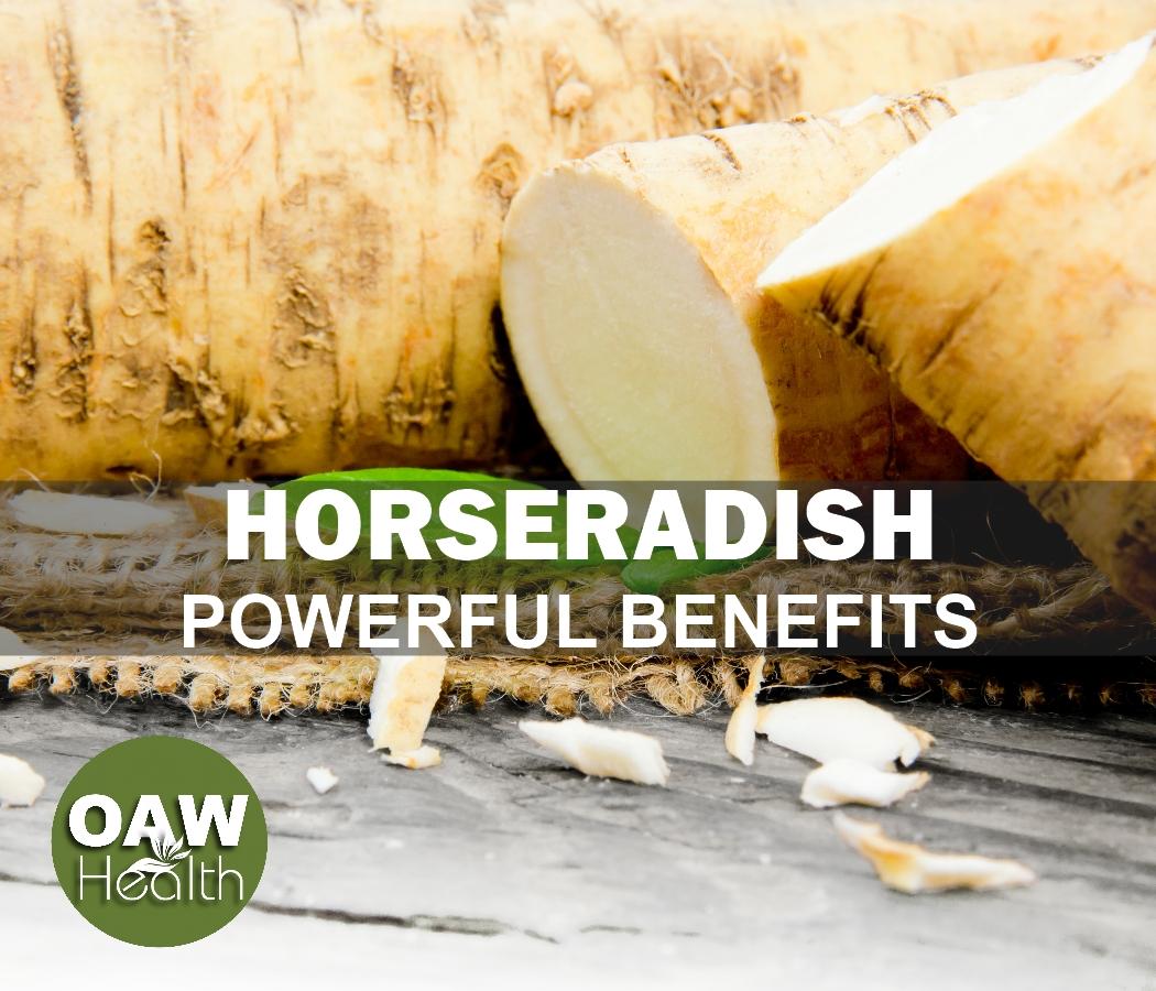 Horseradish – Powerful Benefits