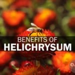 benefits of helichrysum