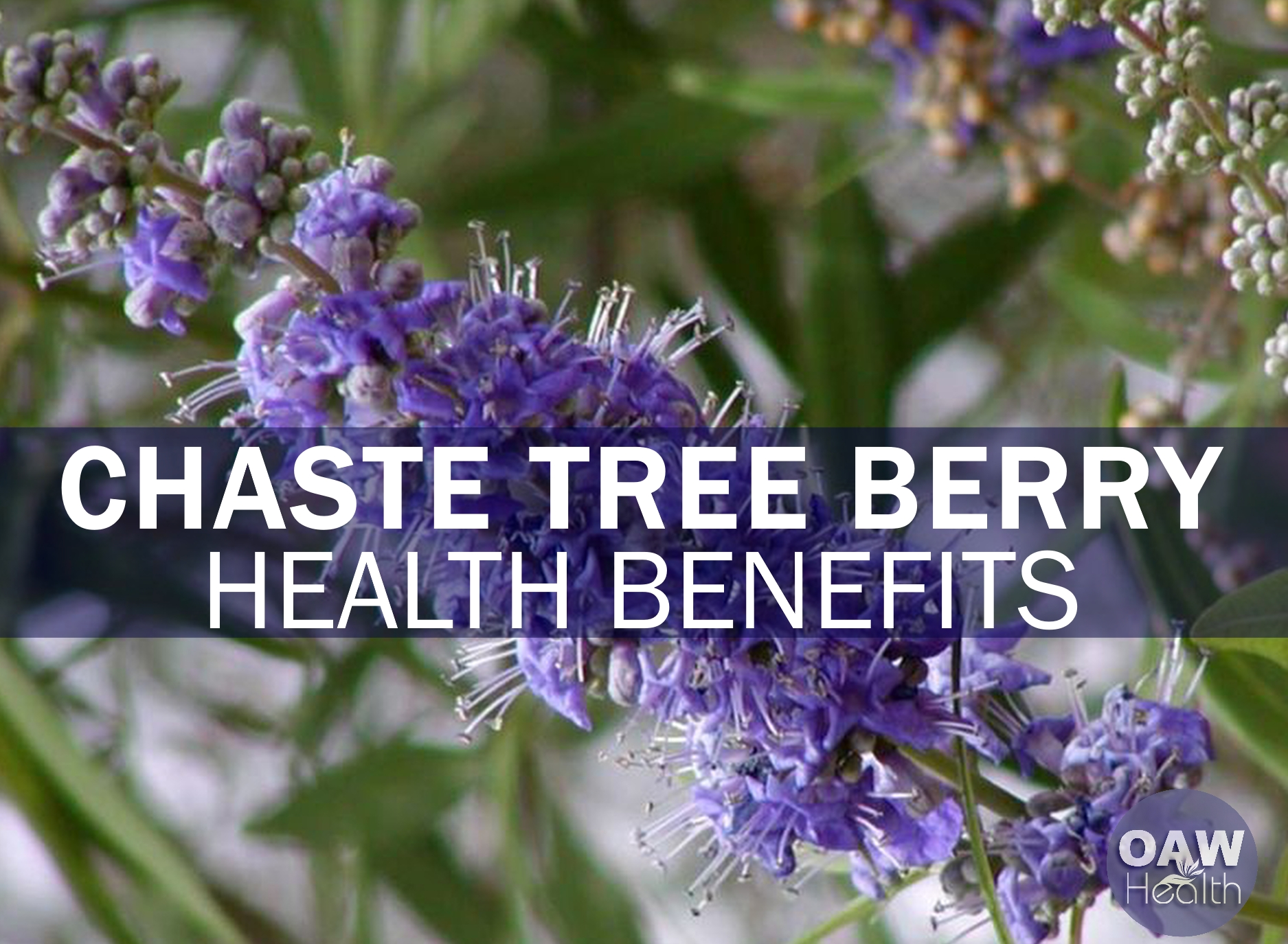 23 Amazing Health Benefits of Chaste Tree Berry