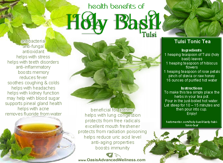 Health Benefits of Holy Basil (Tulsi)