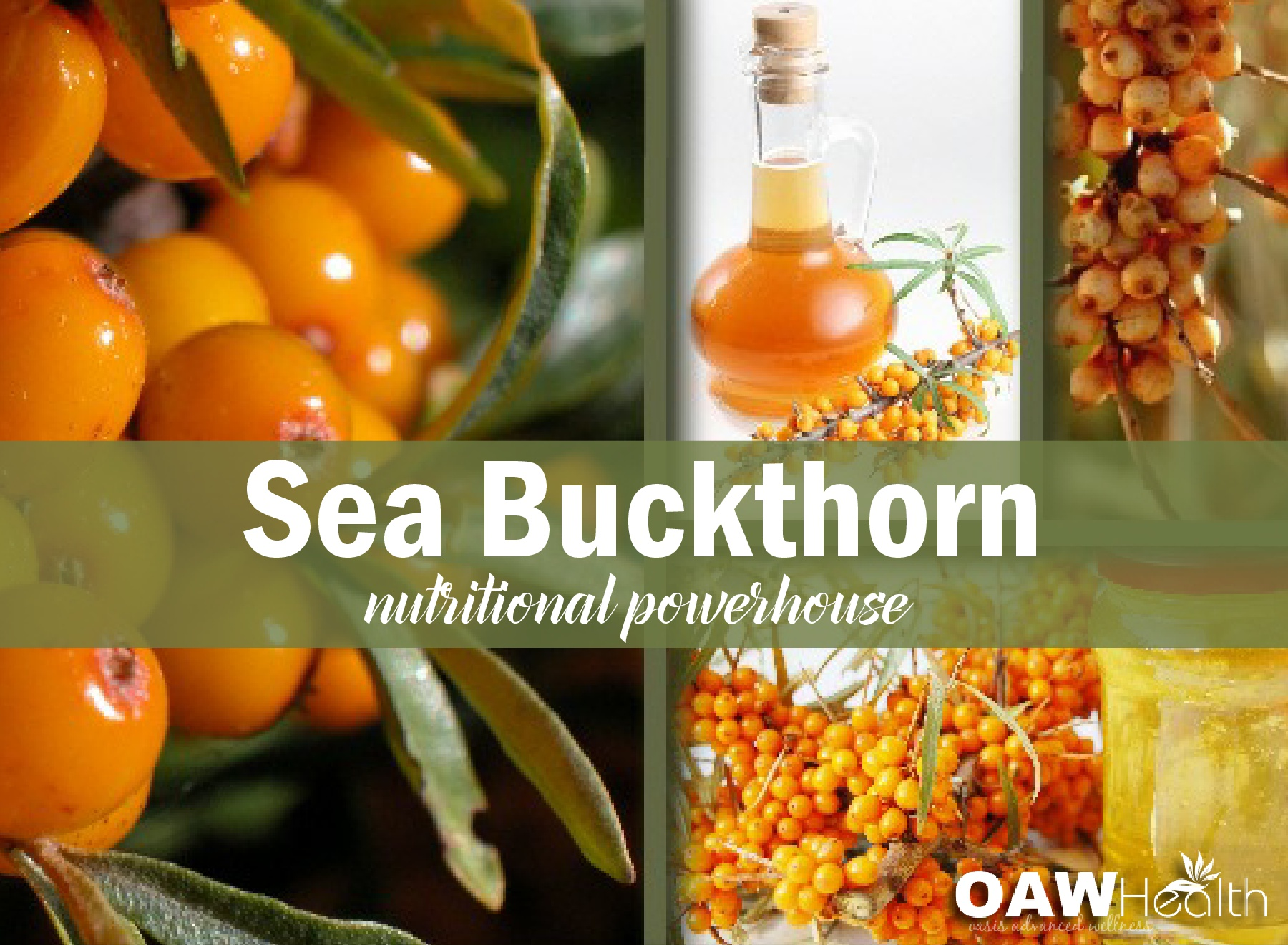 Sea Buckthorn Oil – A Nutritional Powerhouse