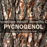 pycnogenol incredible health benefits