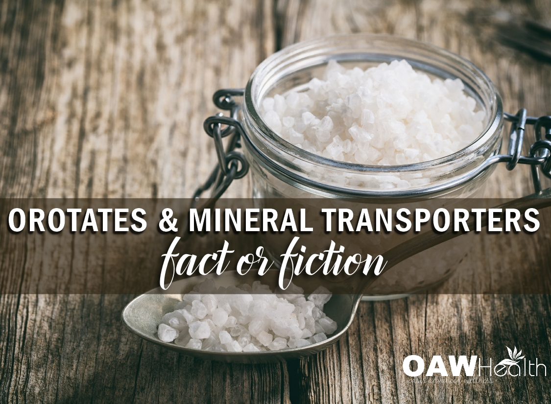 Orotates and Mineral Transporters – Fact or Fiction