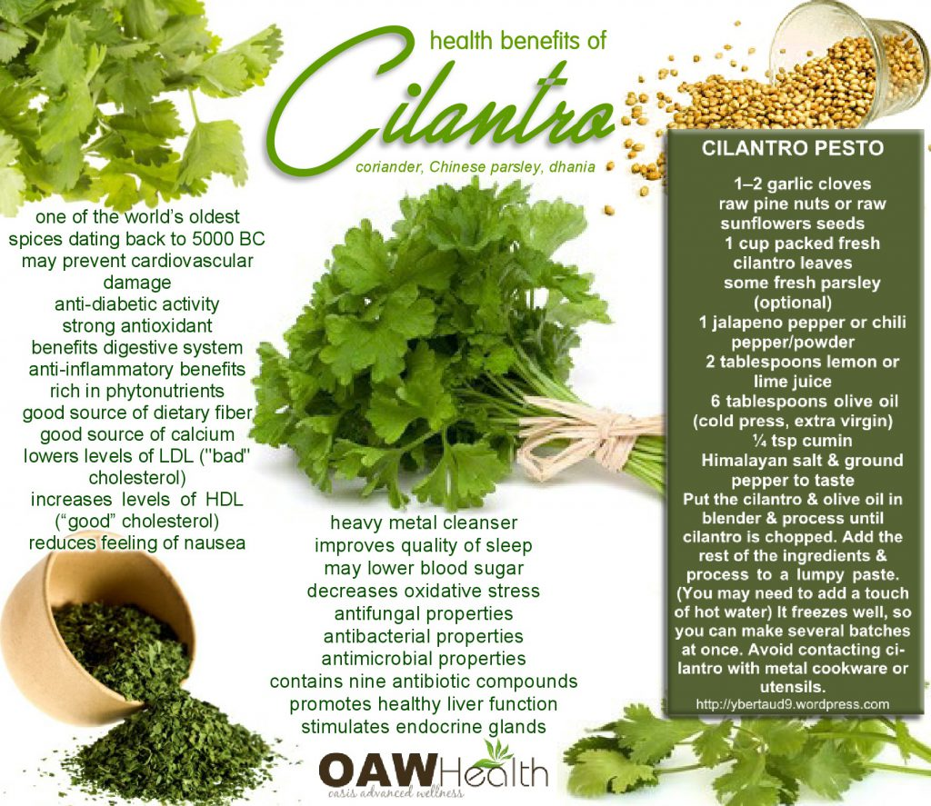 awesome health benefits of cilantro - oawhealth