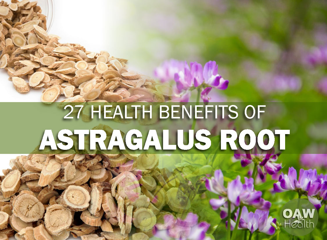 27 Health Benefits of Astragalus Root