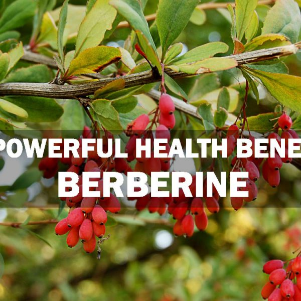 10 Powerful Benefits of Berberine