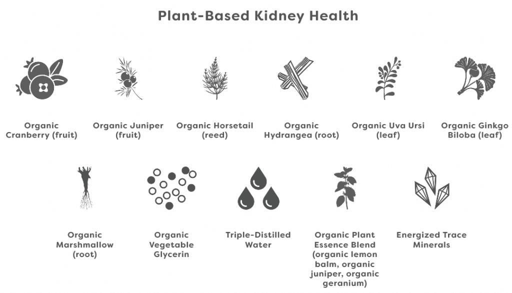 plant-based kidney health ingredients
